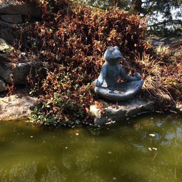 Meditieren mit dem glücklichen Frosch